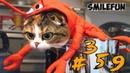 КОТЫ 2020 Смешные Кошки Приколы С Кошками и Котами 2020 Funny Cats