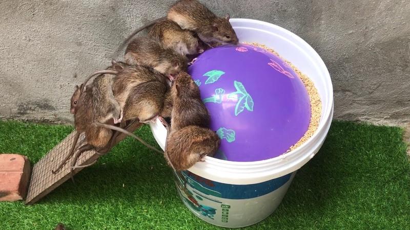Membuat perangkap tikus mudah 2 🐀🐀🐀 Perangkap tikus sederhana dengan balon dan botol air