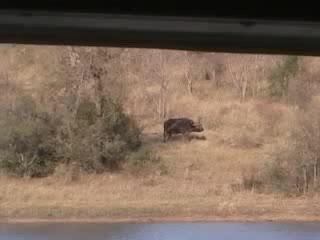КЛАСС!Взаимопомощь и выручка среди животных!Туристы случайно засняли материал, который профессиональные операторы не мог