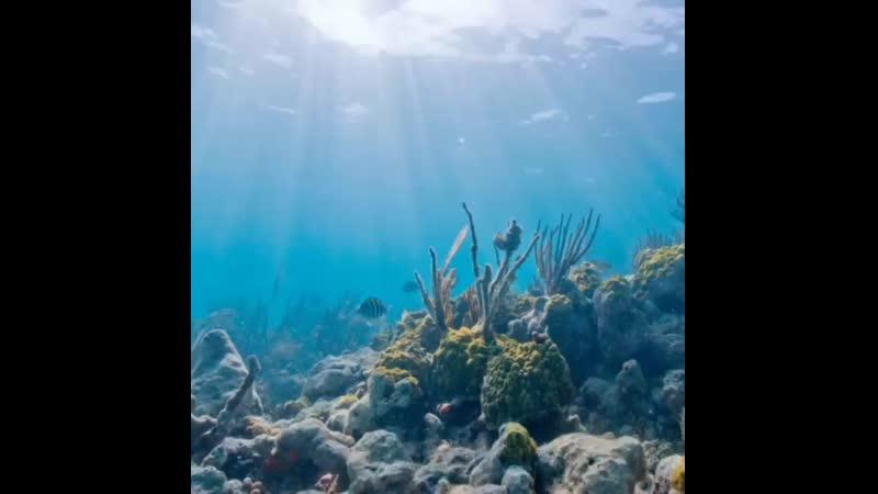 Я хочу на мальдивы я хочу в маями небо цвета RАЯ бора бора сейшелы карибы фиджи багамы голубые гавайи и конечно дубаи