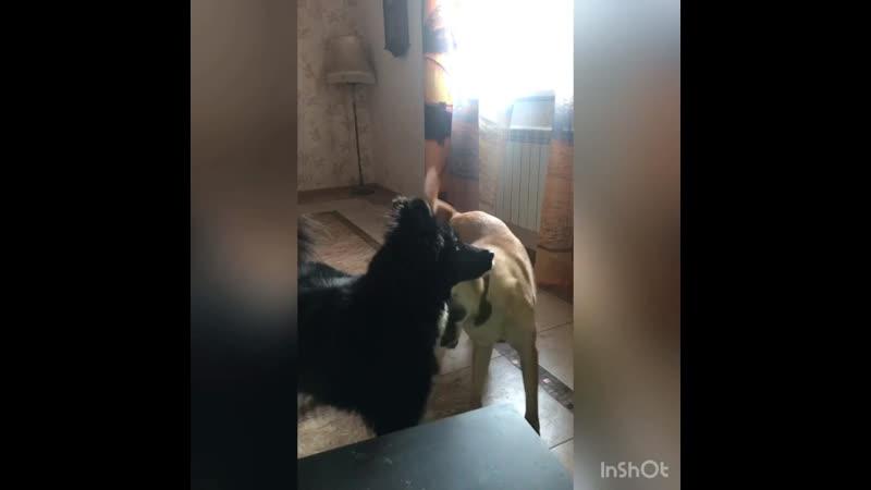 Собачки ждут мампап