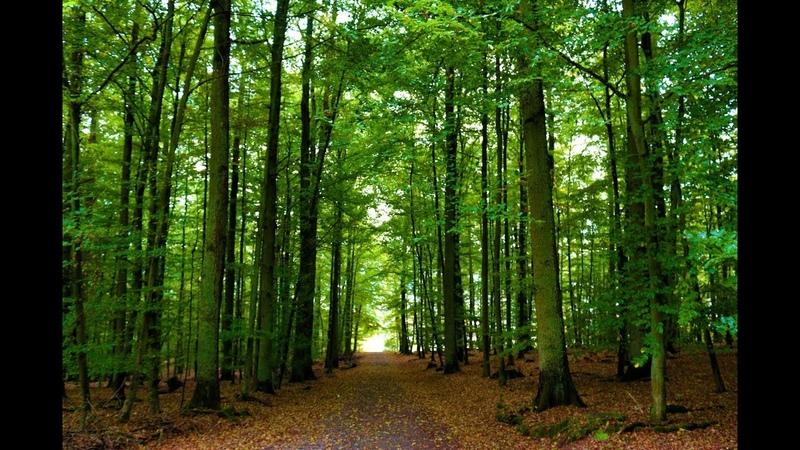 500.000 Euro für einen muslimischen Waschraum, aber keinen Euro für einen Bestattungswald