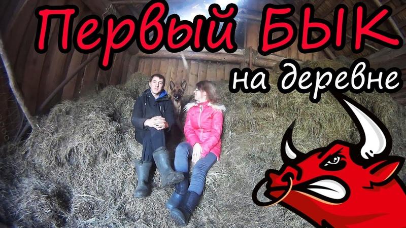 Новости в хозяйстве Наш первый БЫК Попрощались с овцами Белорусская деревня Семья Лях
