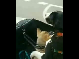 Good-boys-enjoying-the-ride-together.mp4