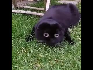 Милый кошмарик (хорошее настроение, домашнее видео, киса, кошка, котенок, черный, темнота, большие глаза, глазища, кошмар, кот).