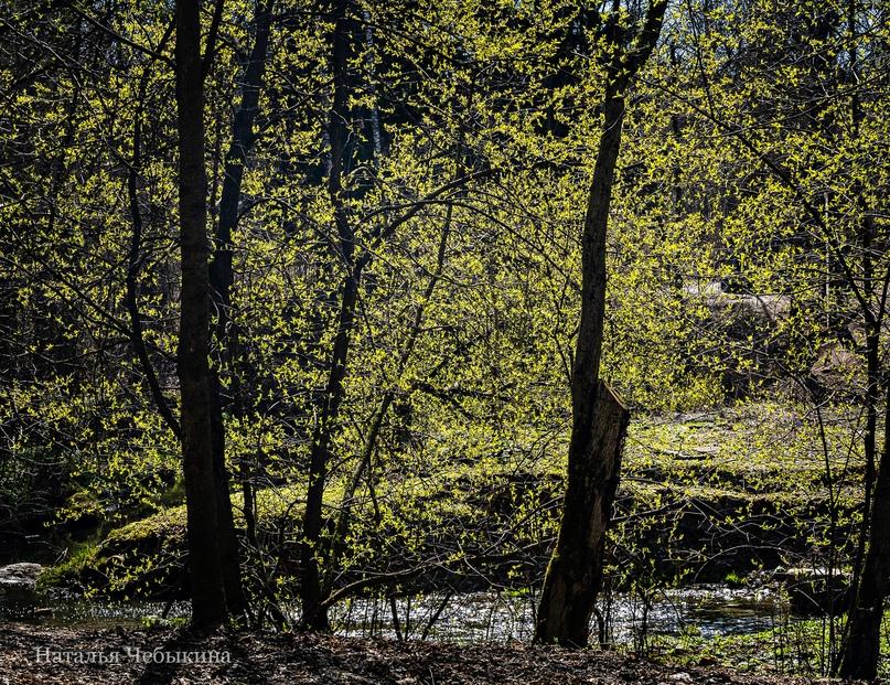 «Весенние огоньки». «Моё любимое время бывает всего несколько дней в году. Когда на деревьях появляются первые малюсенькие свежие листочки. И всё вокруг затягивается салатовой дымкой. Даже не могу вам передать, какие чувства это вызывает внутри! Красота! Нежность, надежда, окрылённость весной, планами, влюблённость наконец! Такое наслаждение смотреть, как горят яркими огонёчками свежие салатовые листики! Так хочется поделиться с вами этой весной и красотой», — говорит Наталья.