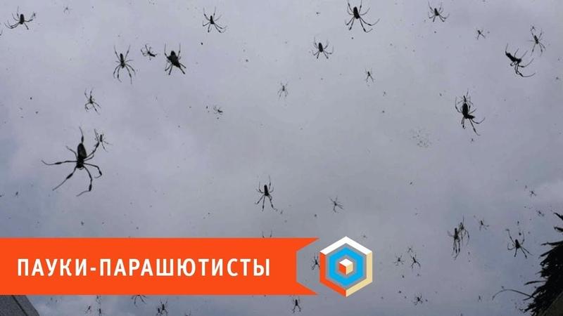 Специально для арахнофобов: пауки летают и при том очень умело!