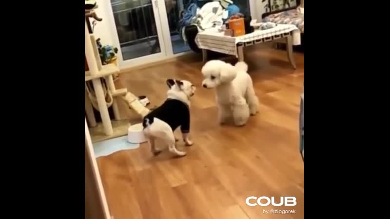Doggy dance off