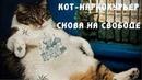 Кот наркокурьер сбежал от российских следователей не дождавшись суда Плохие Новости