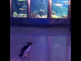 Пингвинам разрешили смотреть на рыбок в океанариуме