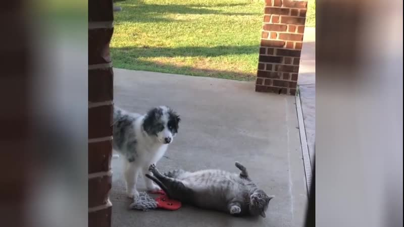 Cat couldn't fight off the puppy
