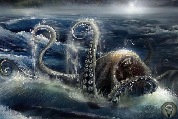 10 историй об опасных нападениях осьминогов на человека