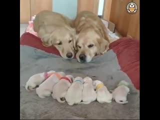 Мамы всегда мамы._Даже когда они несколько волосаты или пернаты ( 1080p )