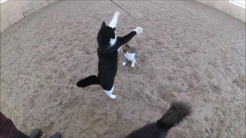 Веселые котики