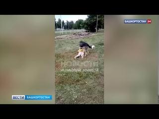«Лежи тихо, Настя!»: в Башкирии собака напала на девочку, взрослые сняли видео