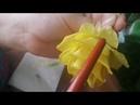 МК Роза из полимерной глины (холодный фарфор). Тонировка