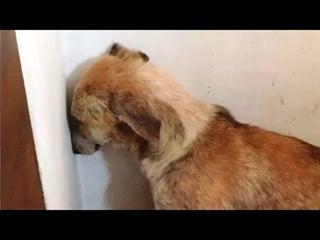 Эту собаку взяли из приюта, но она сутками смотрела в стену, пока хозяева не придумали это!