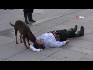 Бездомная собака пришла на помощь лежащему человеку