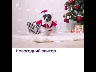 Топ-5 новогодних костюмов для животных