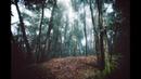 Лесной Болван - Птица
