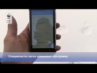 Как мобильники помогают при учётах ирбиса
