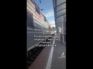 Видео от Papafermer Ecoferma