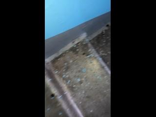 Видео от Динары Багаповой