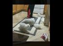 Приколы про котиков Подборка смешных кошек и котят