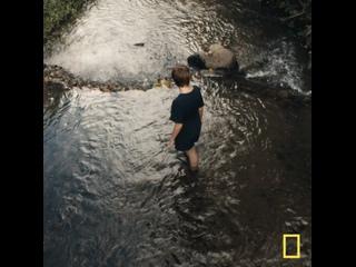 «Эффект с Галь Гадот»   National Geographic