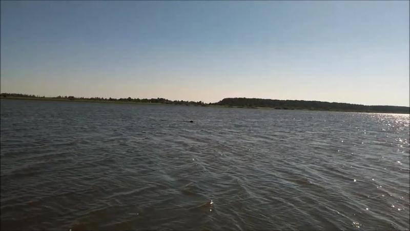 Руся и рыба противостояние 30 07 2018