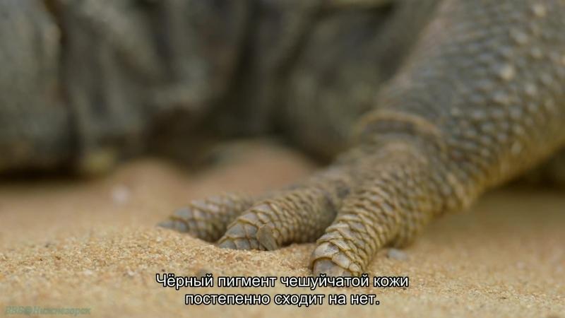 BBC Дикая Аравия 1 Песок ветер и звёзды Познавательный природа путешествие 2013