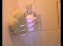 Злой Дед сидит в туалете Он срёт говном Говно и потом он Подрочил Но не на камеру он дрочил