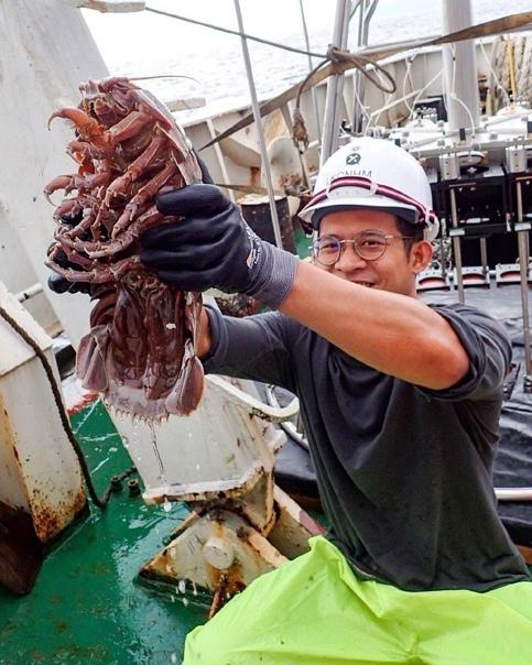 Это не гигантский таракан и даже не Чужой Изопод, так называют эту рыбу - это вполне себе нередкое явление в глубинах океана.Он достигает длины в 70 см и веса около 2