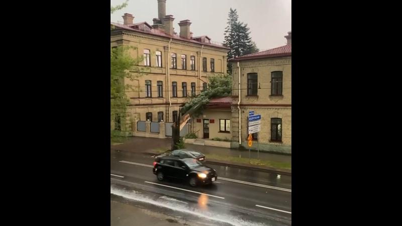 Дождь в Гродно рубит деревья В Гродно в 19 06 упало очередное дерево прямиком на военный госпиталь