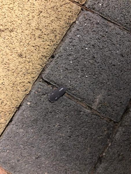 ДевАчки, кто потерял ноготь в центральном парке? З...