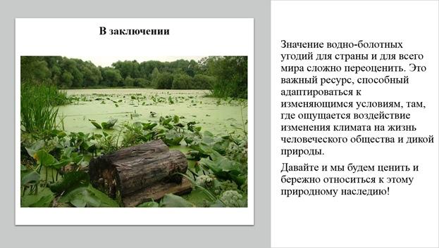 Поговорим о болоте., изображение №5