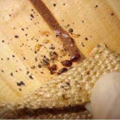 ‼️Избавим ваши участки от кротов, клещей, муравьев...