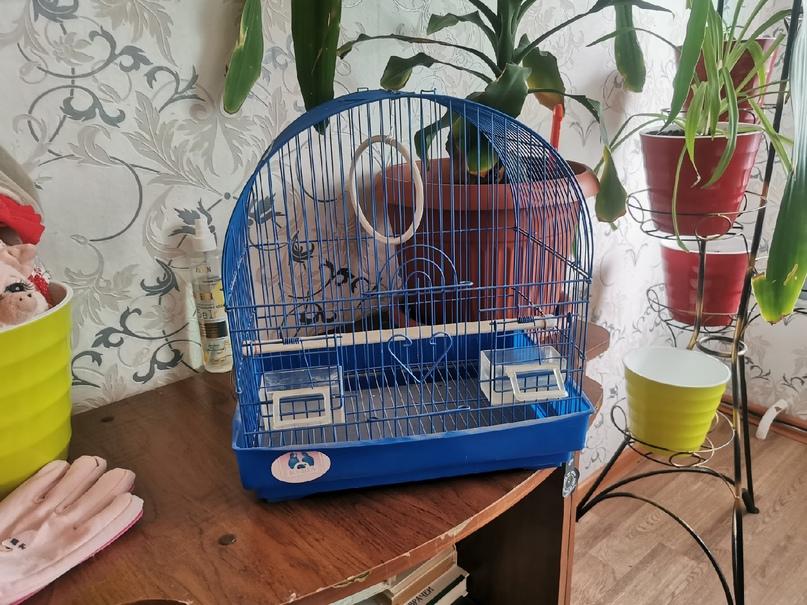 Купить клетку для попугаев. (цена 500р | Объявления Орска и Новотроицка №28101