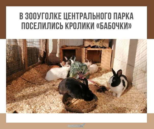 В зооуголке Центрального парка поселились кролики «бабочки» ????  Здесь есть чёрные с белой шеей и передними... Тула
