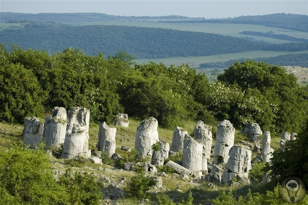 Долина «Каменный лес»