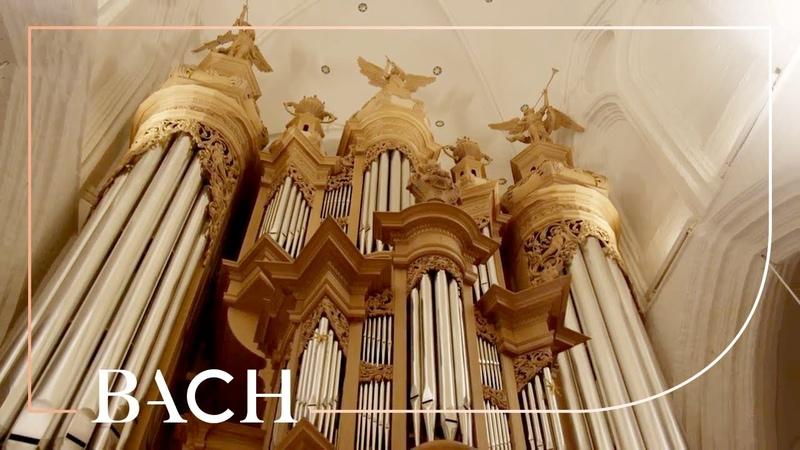 Bach O Lamm Gottes unschuldig BWV 656 Zerer Netherlands Bach Society