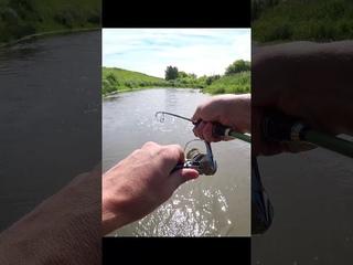 Рыбалка, ловля голавля