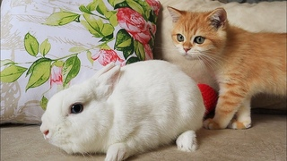 😲 What is it?!  Kittens Artist and Arnold want to be friends with a fluffy eared cloud.☁️🐇