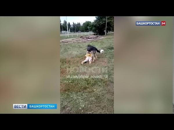 Лежи тихо Настя в Башкирии собака напала на девочку взрослые сняли видео