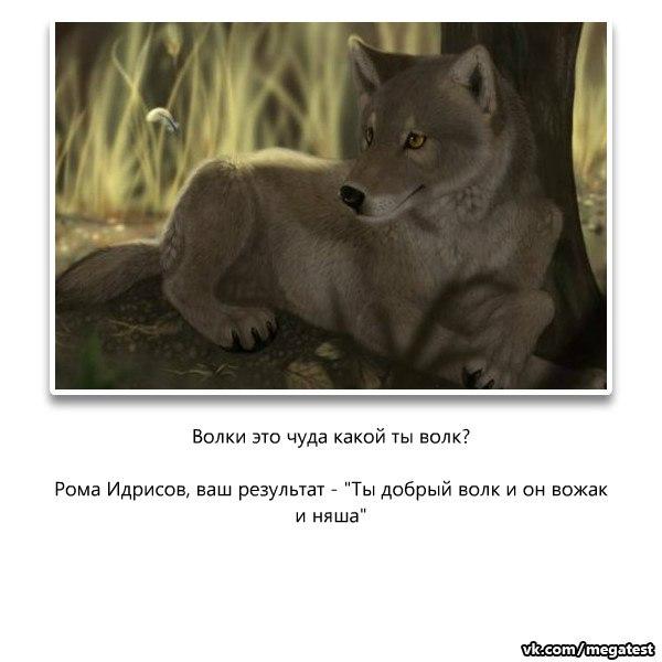 тесты про волков в картинках терзания смерть