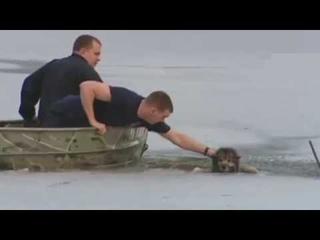 Спасение попавших в беду диких животных #7